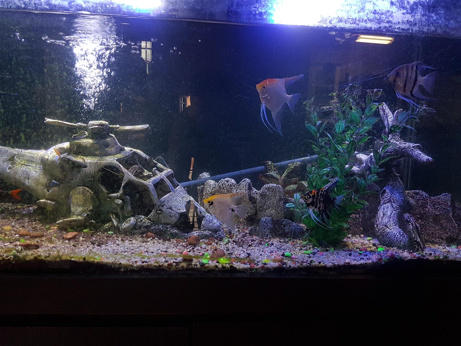 Large fishtank for sale
