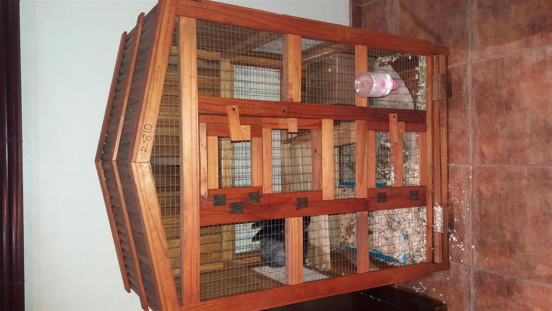 Huge wooden cage and a Nederland's dwarf rabbit