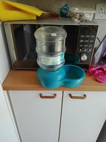 Pet holiday water feeder