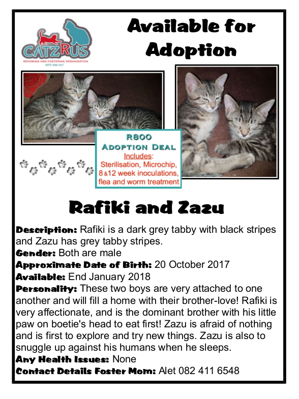 Rafiki and Zazu are CatzRUs rescue kittens, ready to fill your home with fun!