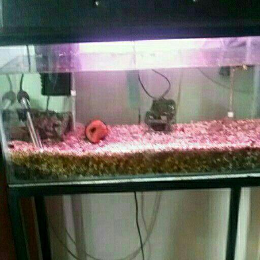 60cm Aquarium