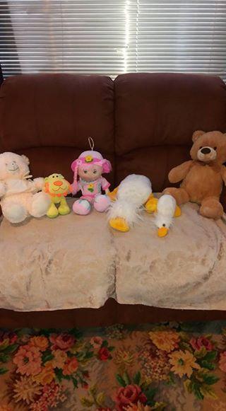 TEDDIES for sale