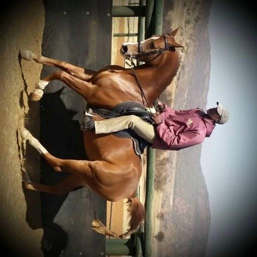 Registered Arabian Mare