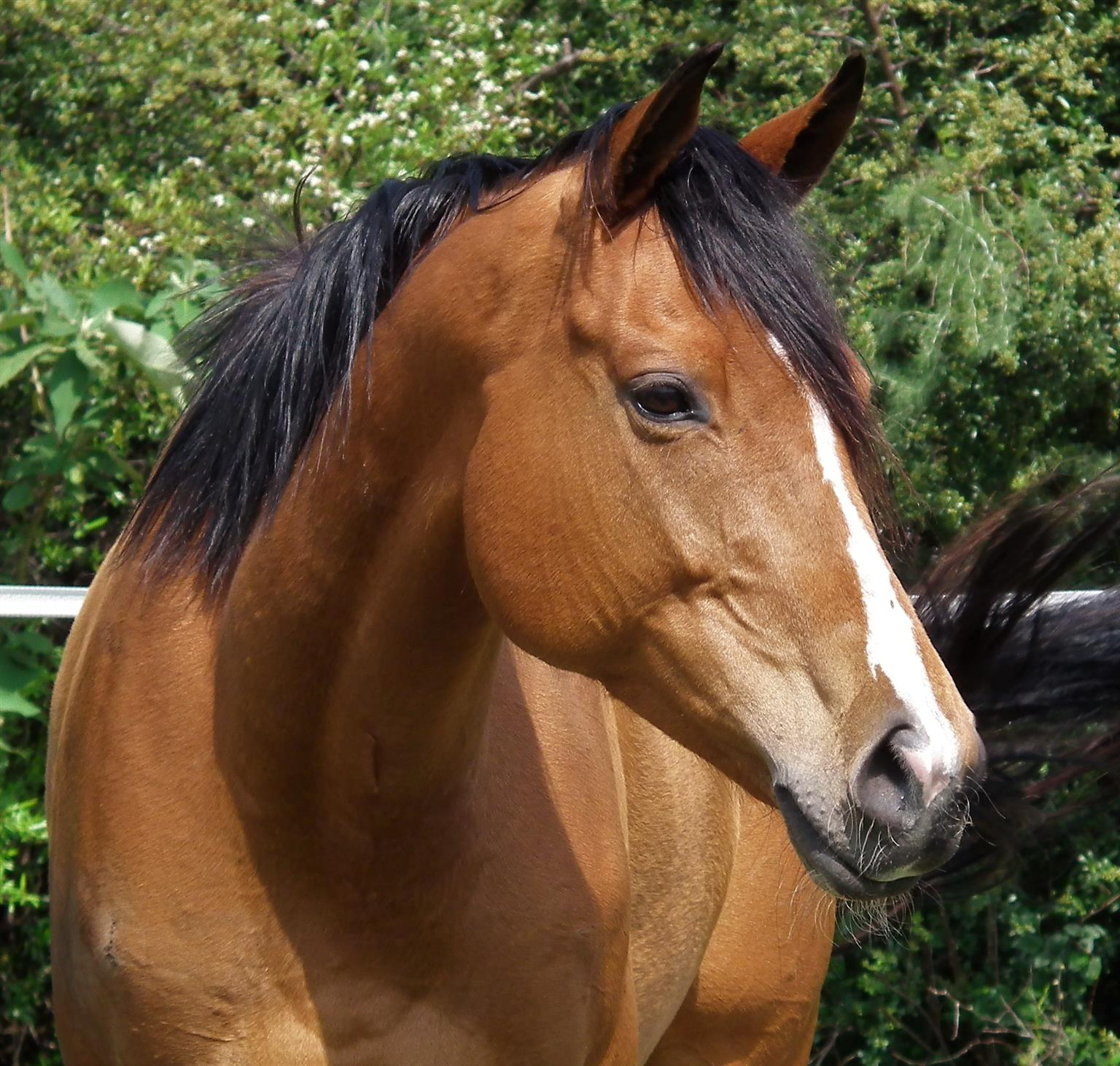 Very good looking Tb mare