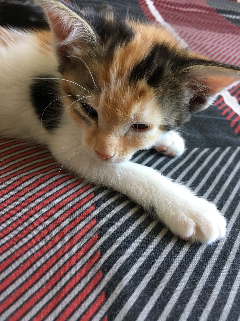 Kittens for sale!