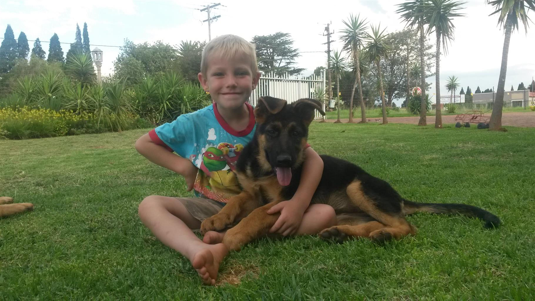 GSD FEDERATION OF SA PUPPIES FOR SALE