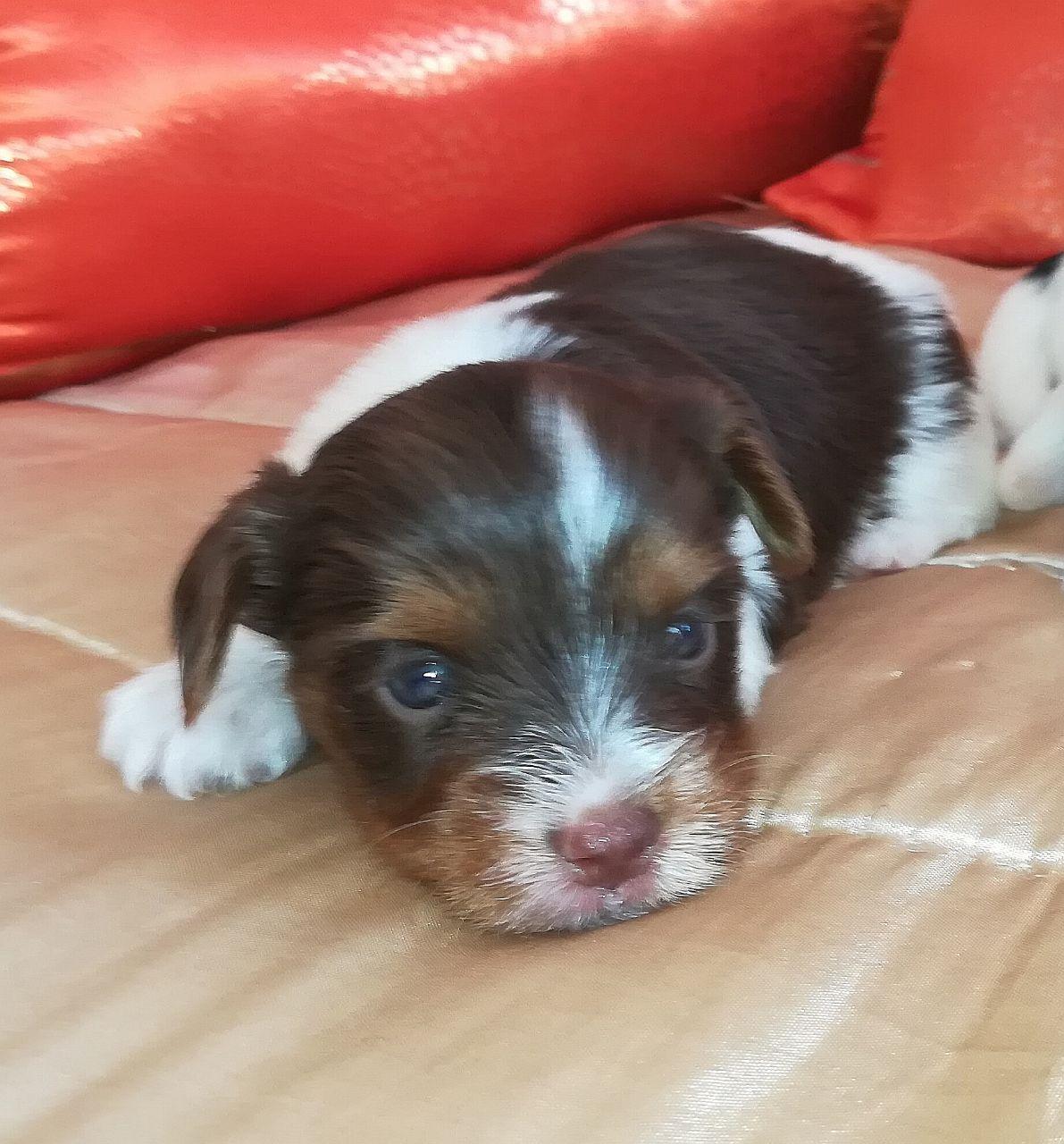 Adopt a Dog or Puppy in Randburg | Junk Mail