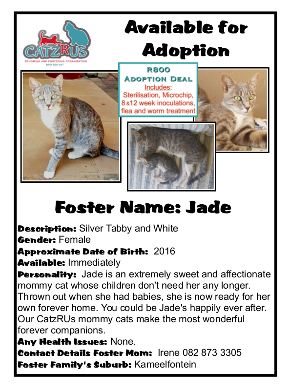 Giving hope to the helpless - CatzRUs. Meet Jade!
