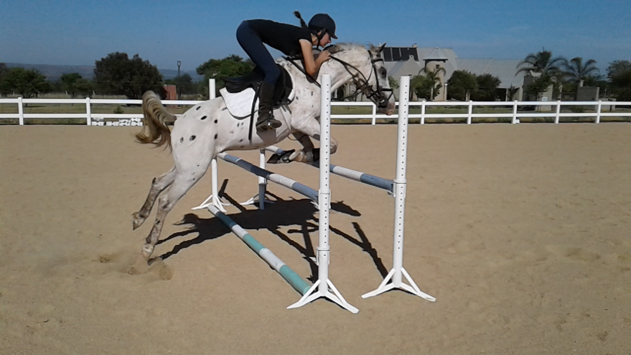 Excellent Show Jumping Pony for sale