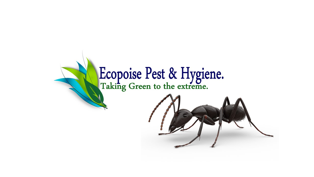 TERMITE PRE-CONSTRUCTION TREATMENTS - ECOPOISE PEST