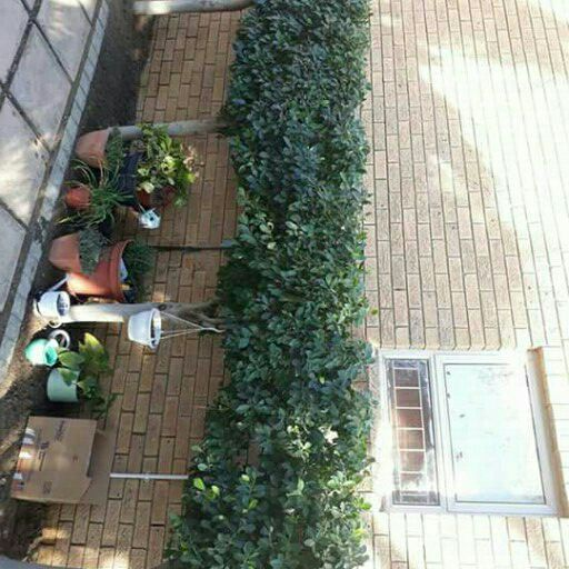 Hedge trimming kuils river 0728851069