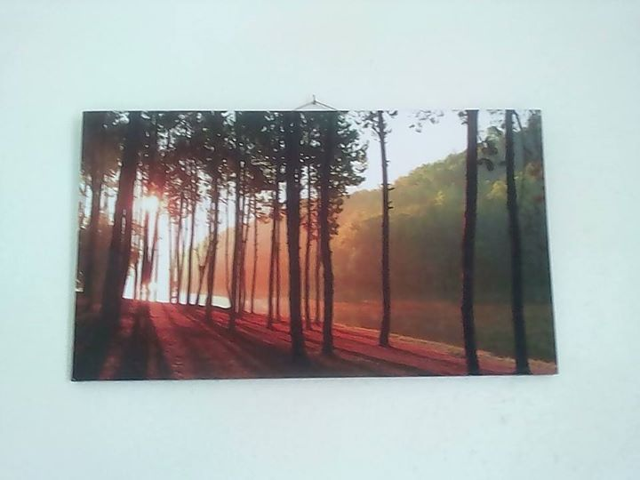 Forest trees frame