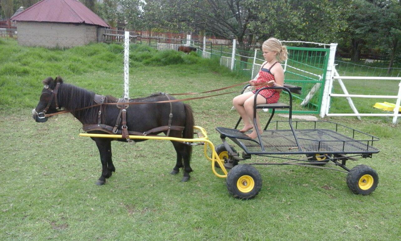 Package deal. Very tame Mare cart and harness.
