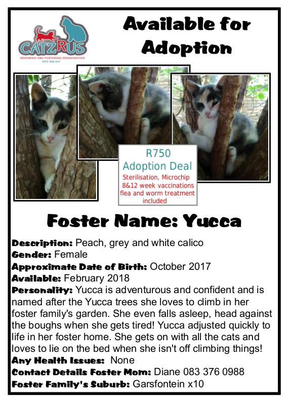 You won't regret coming to meet young Yucca - a CatzRUs Kitten Pretoria East