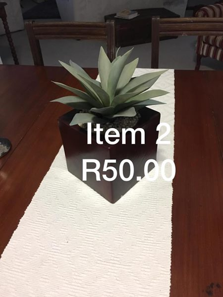 Small potted plant for sale