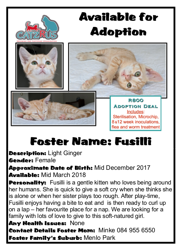 Fusilli - another rescue of a homeless helpless kitten. Help us save more lives by adopting from CatzRUs.