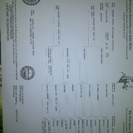 Registered Purebred Arabian Mare