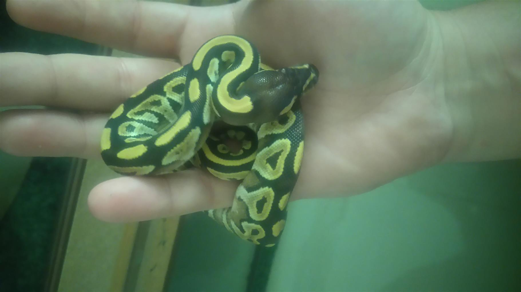Mojave bp for sale