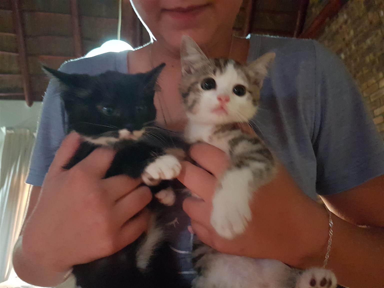 5 loving kittens