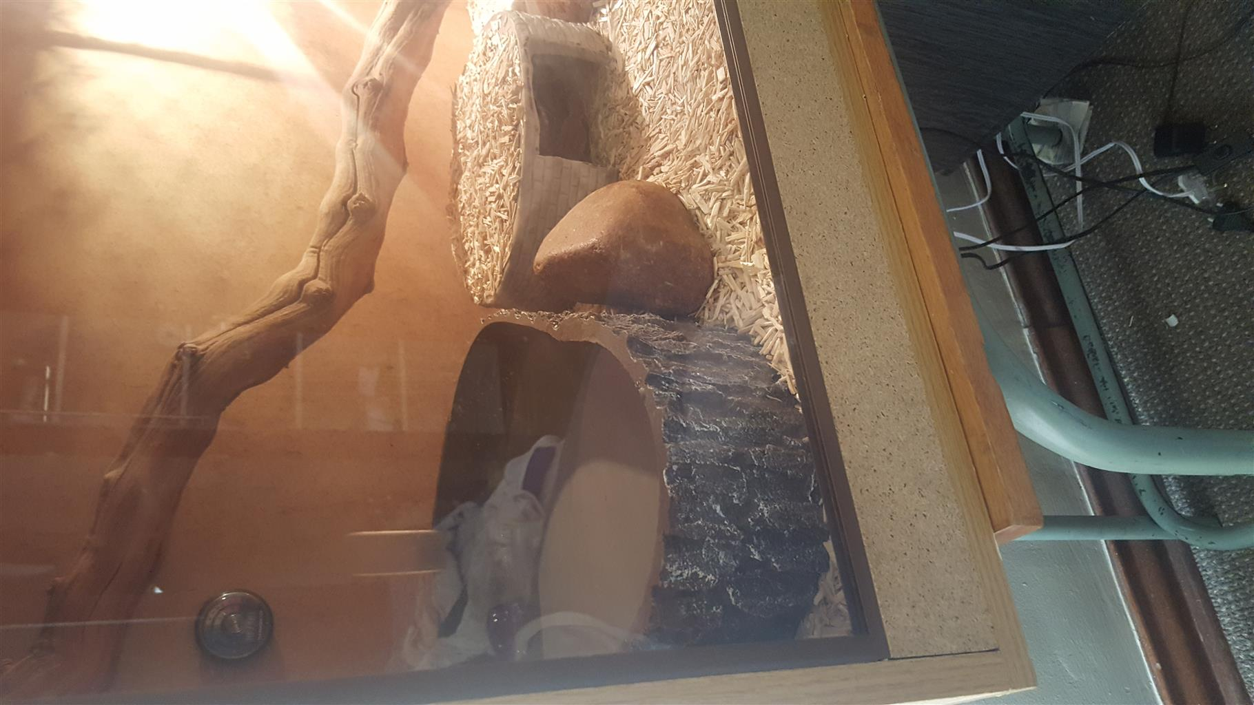 Large reptile cage for sale