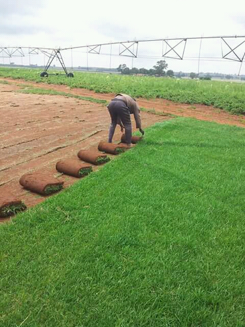 Need Kikuyu,LM,Evergreen Instant Lawn & Organic Manure? Call Paul 0617591082