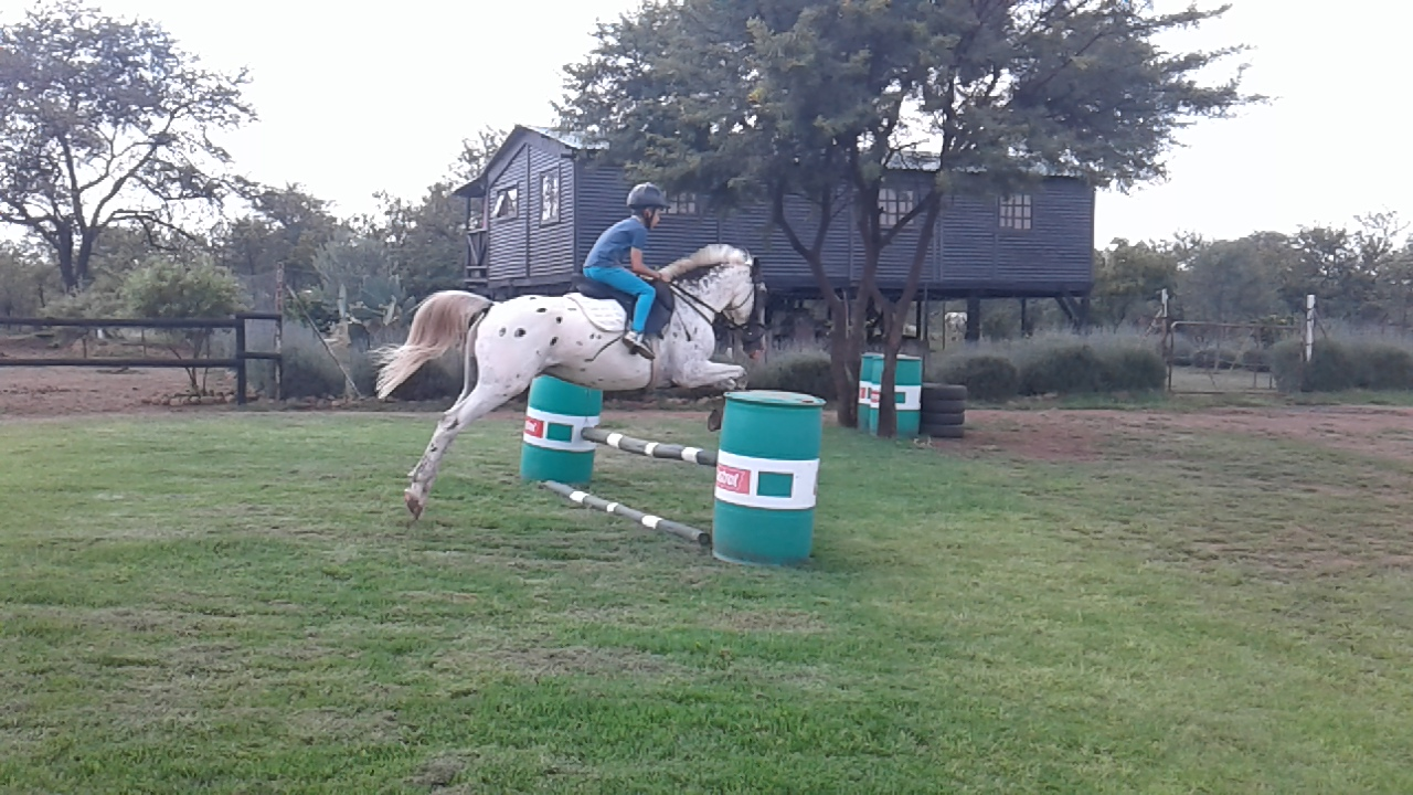 Fantastic kids Showjumping pony for sale