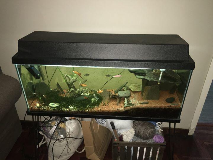 Complete Tropical Aquarium
