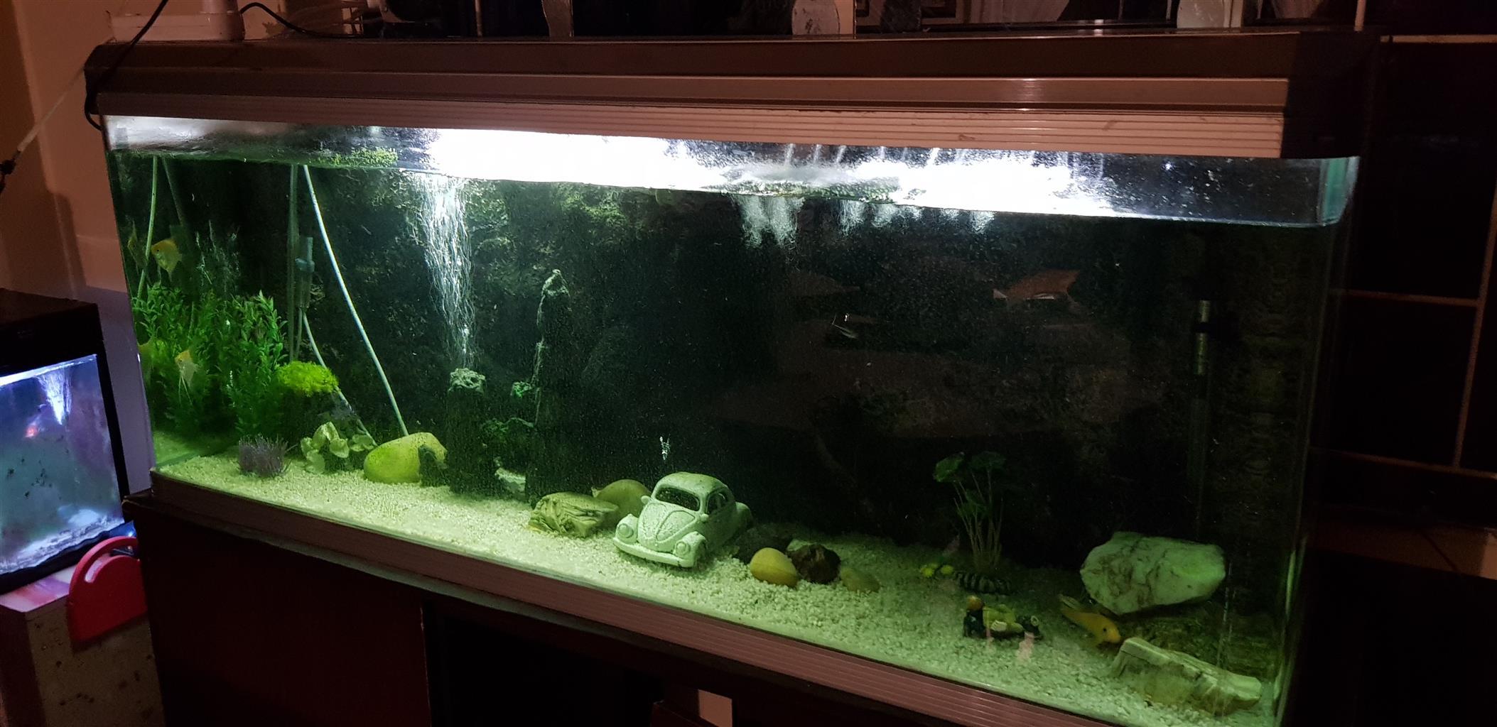 Large Boyu fishtank for sale