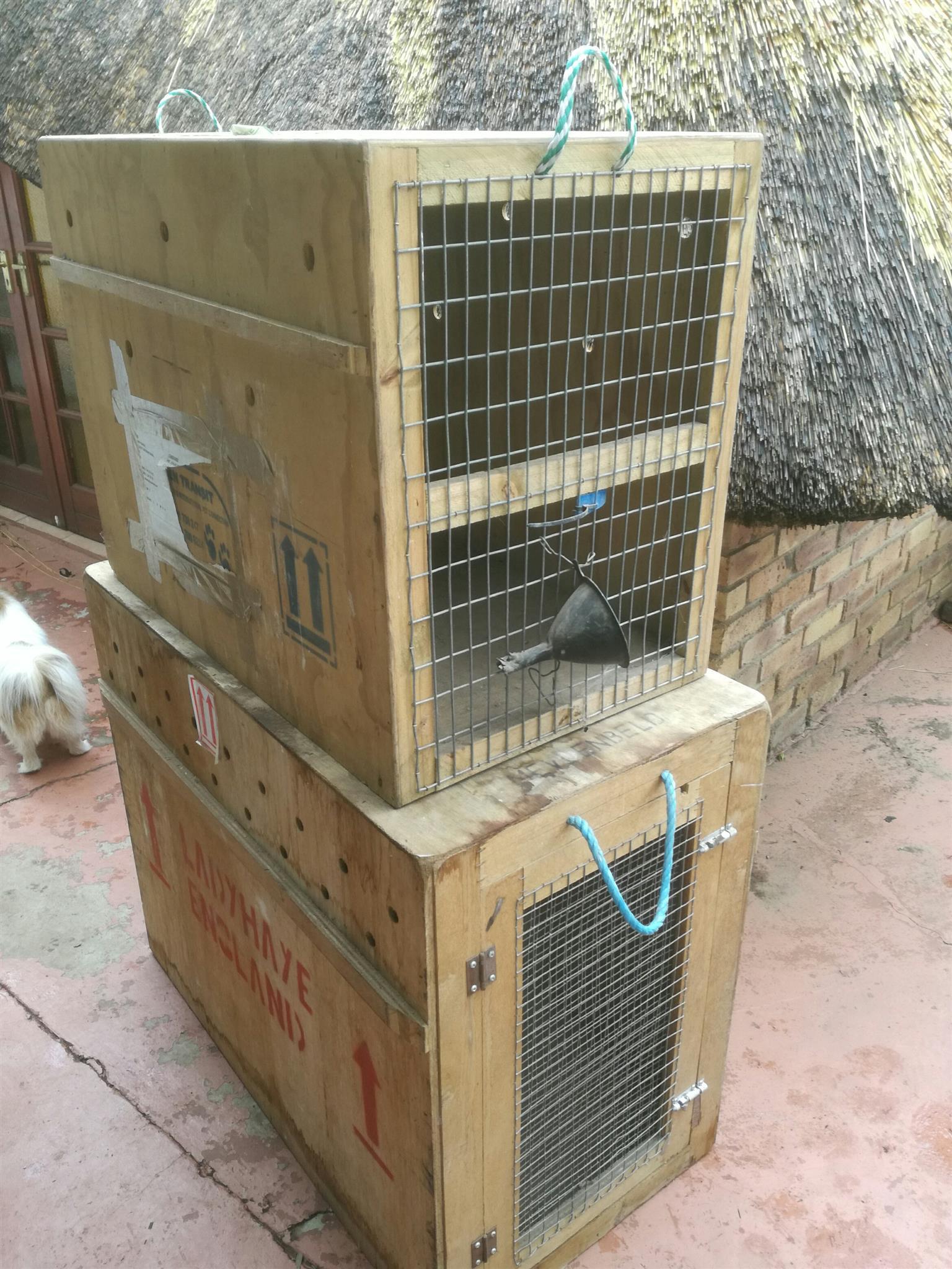 Dog Transport Cages