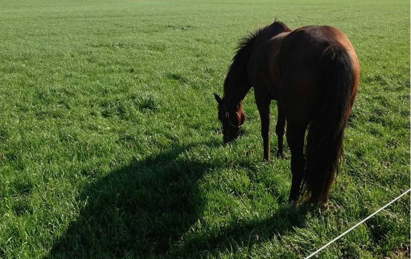 All seasons horse pasture mix