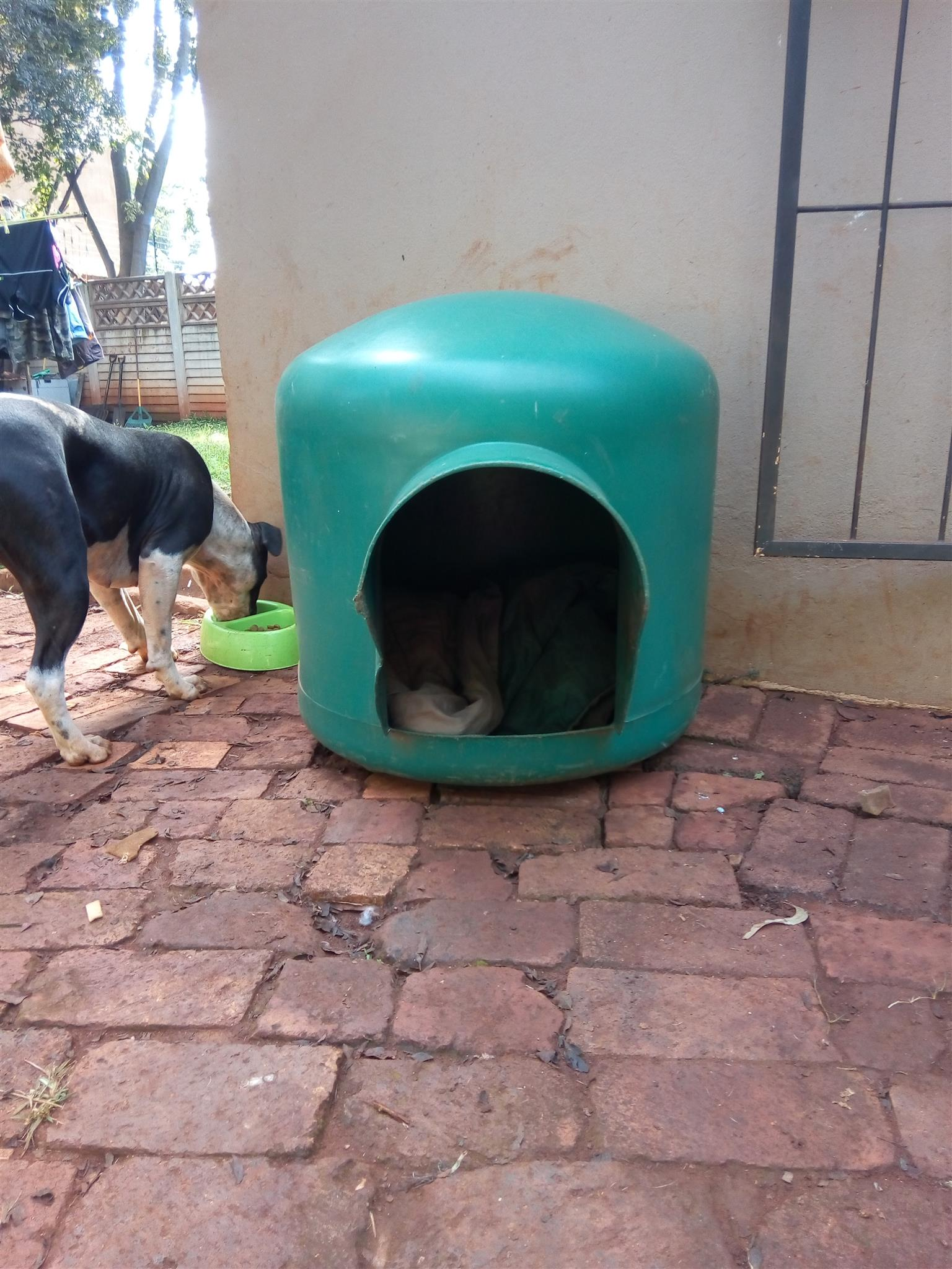 dog kennel pretoria in Pets in South Africa | Junk Mail