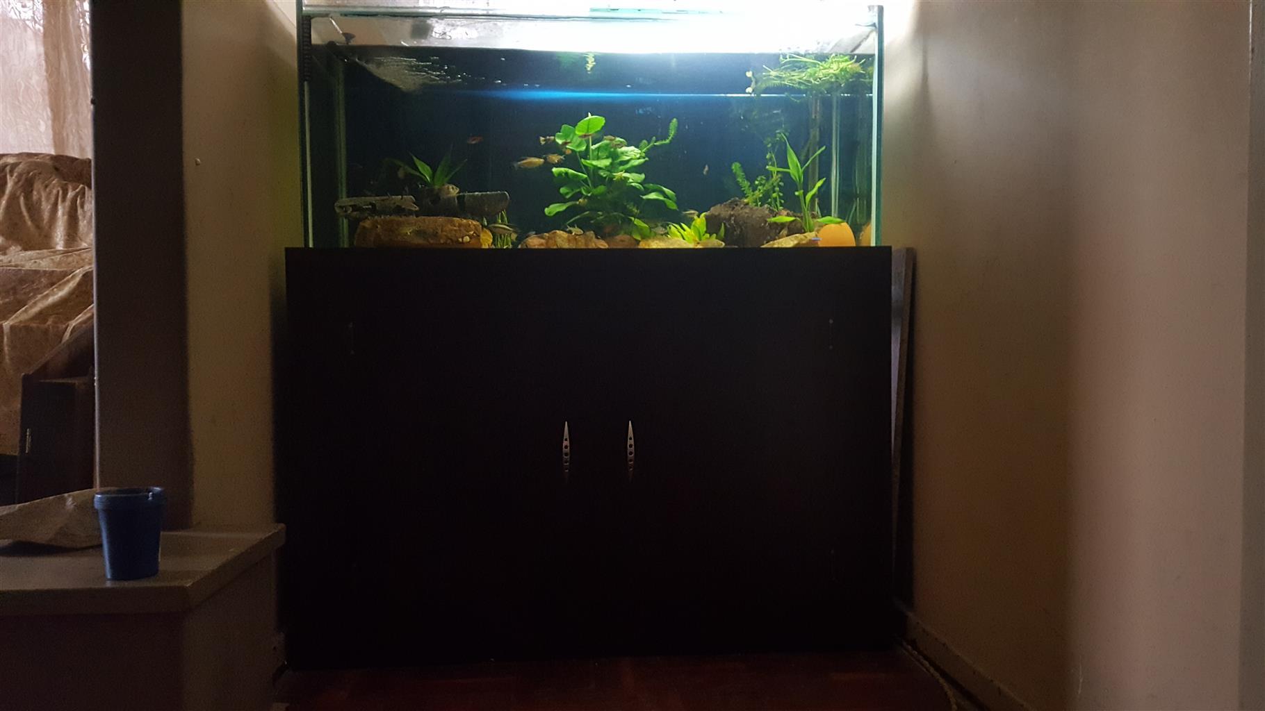 Fish tank 1.2m 5ft 12mm glass
