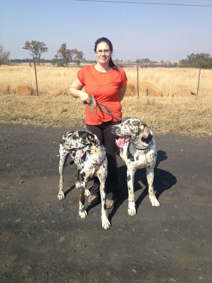 Harlequin Great Dane Male and Femail Pair