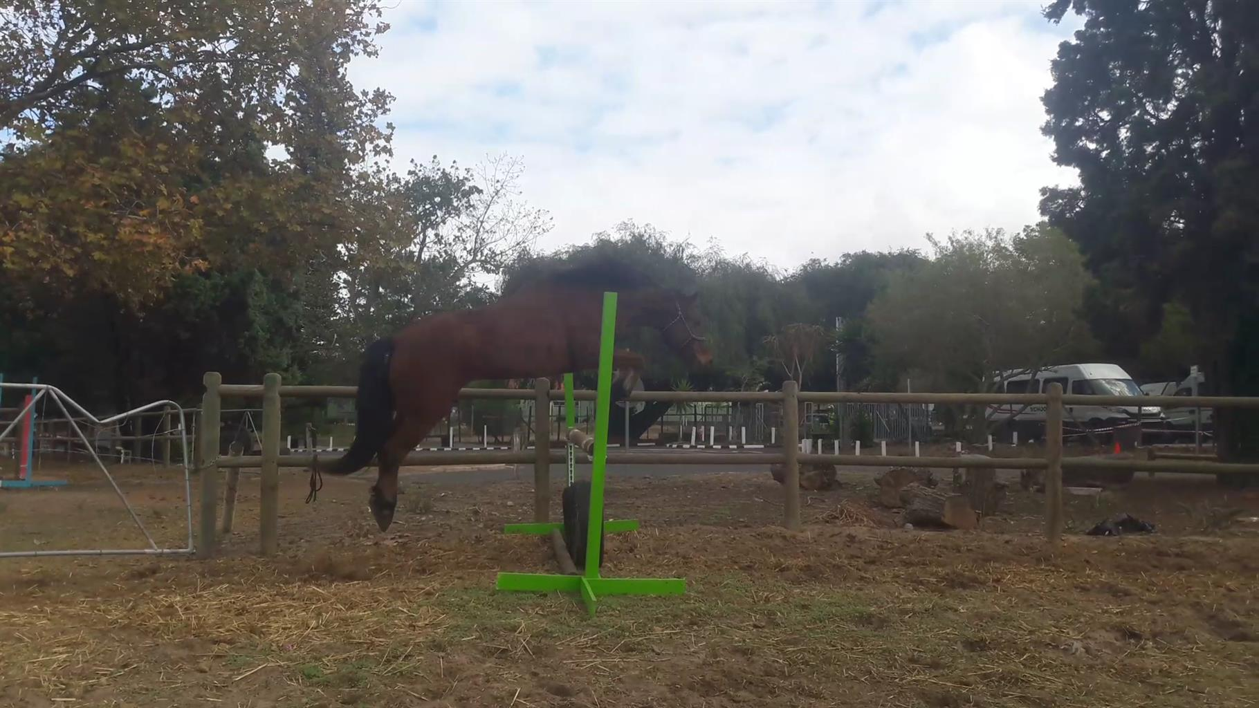 Eventing gelding for sale