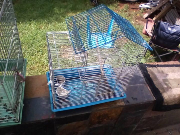 Blue bird cage for sale