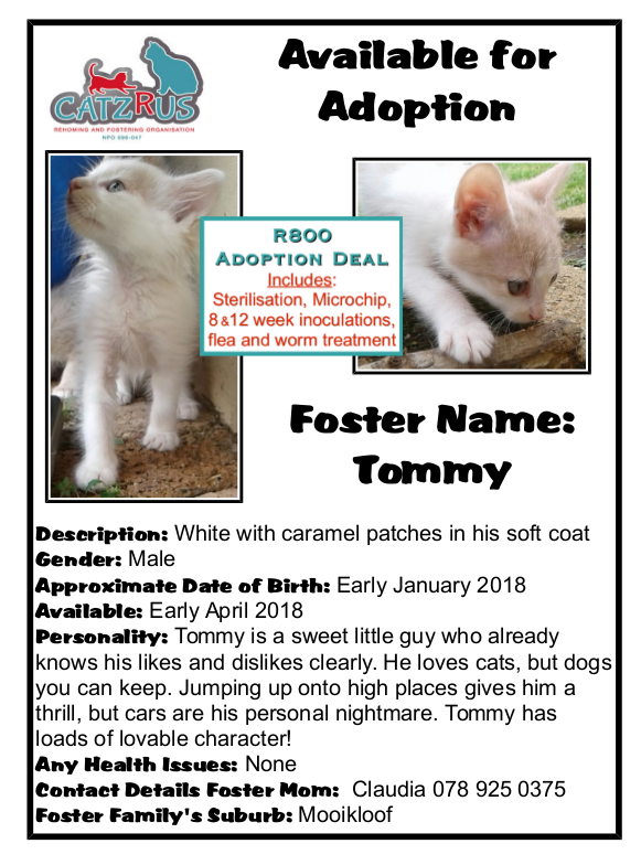Meet Tommy. For every kitten who finds a forever home, we can rescue another! A CatzRUs kitten.