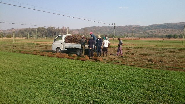 KIKUY Instant Lawn Delivered in Pretoria
