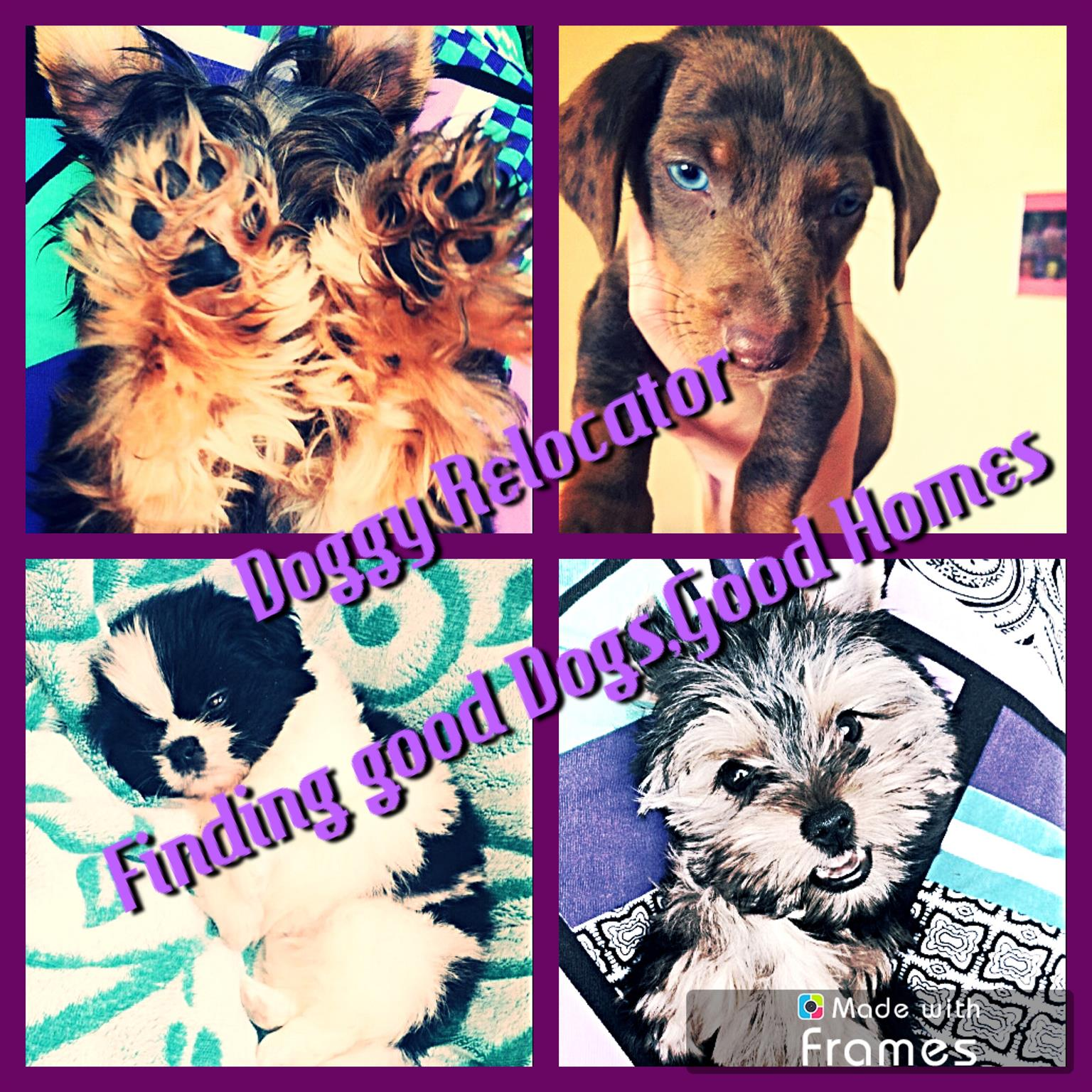 Doggy Relocator-Finding Good Dogs ,Good Homes.