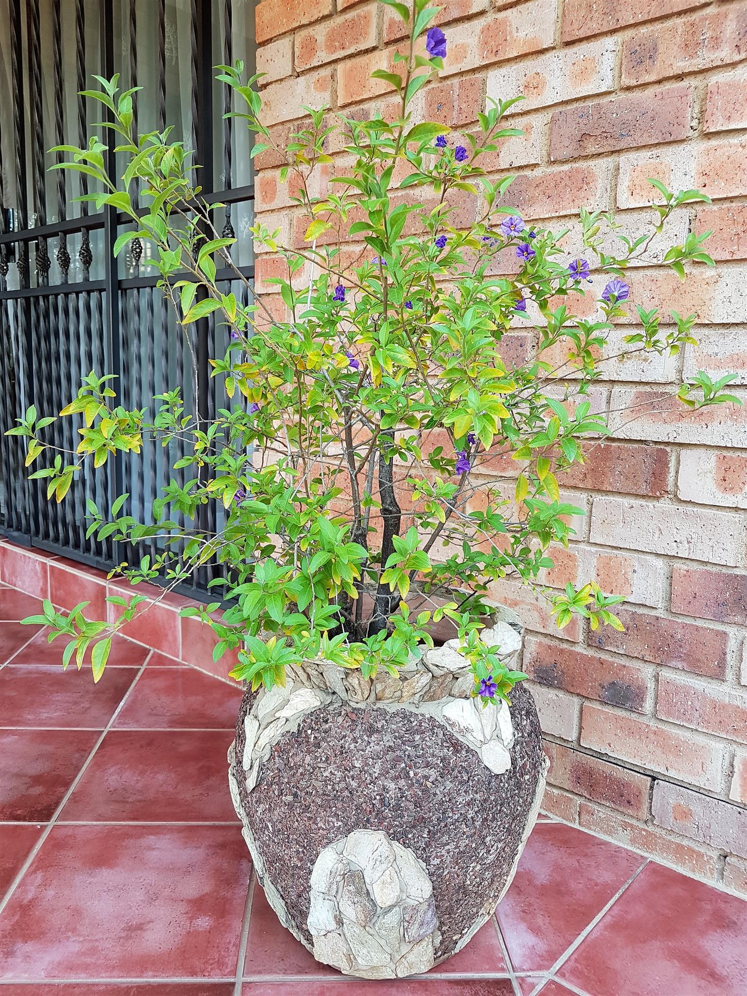 Exceptional Gardening Pot