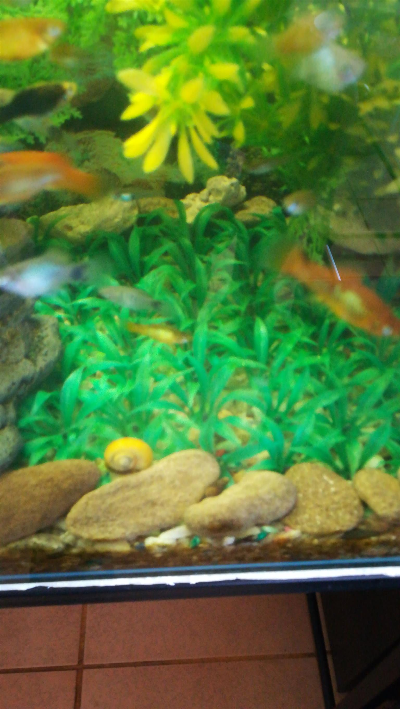 Fish tanks plastic grass mats
