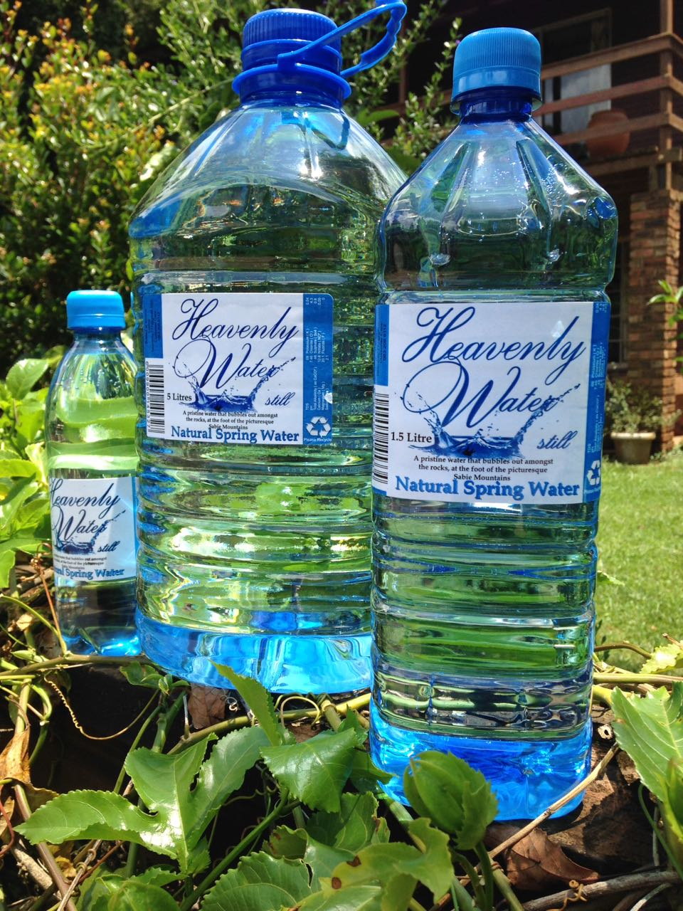 Pristine mountain spring water directly