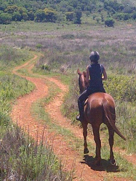 Stabling Available - Johannesburg South