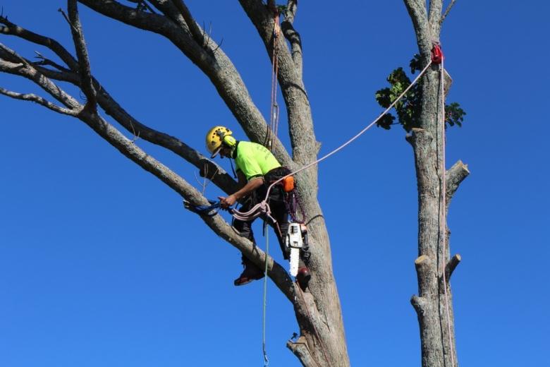 KENKUT Tree Felling