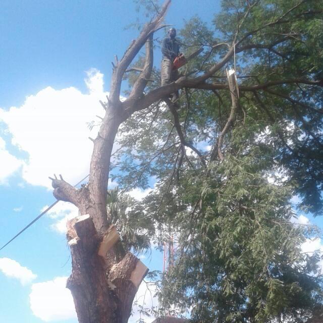 JLM TREE FELLING