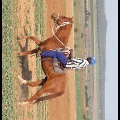 Registered Quarter Horse