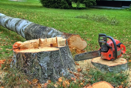 Gardening, tree felling, instant lawn, tree stump removal.