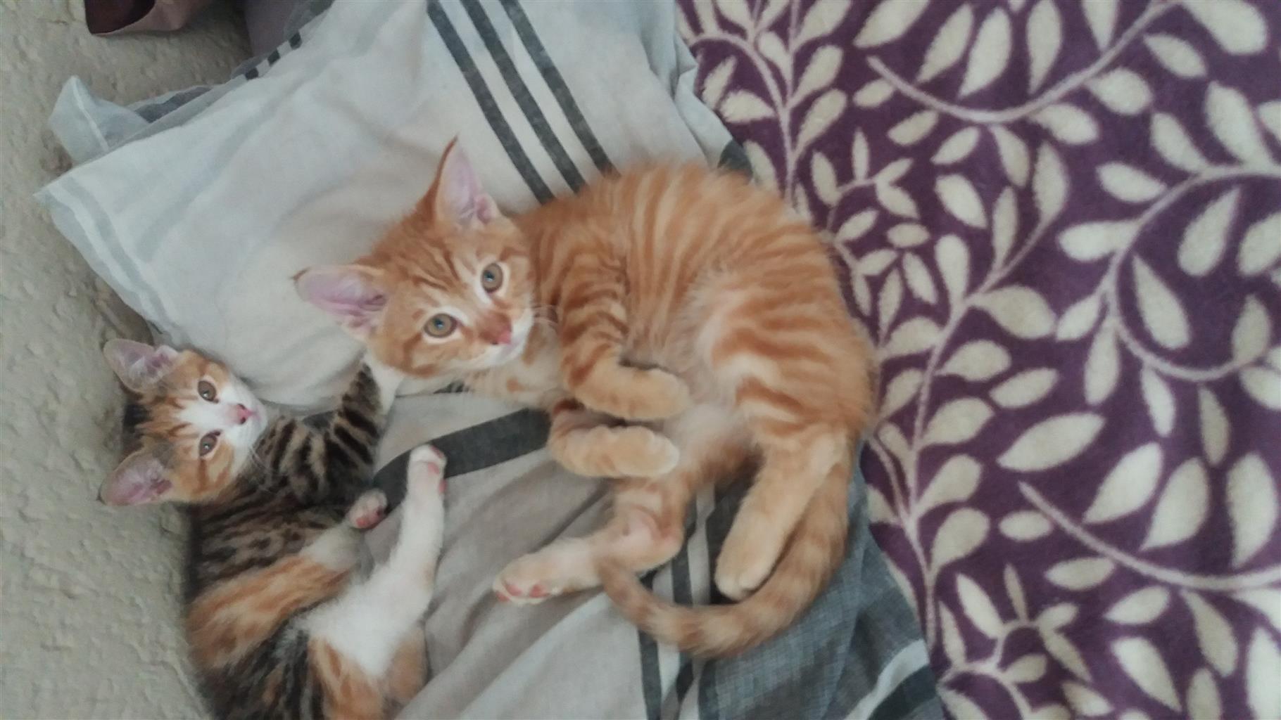 kitties needing a very good home urgently