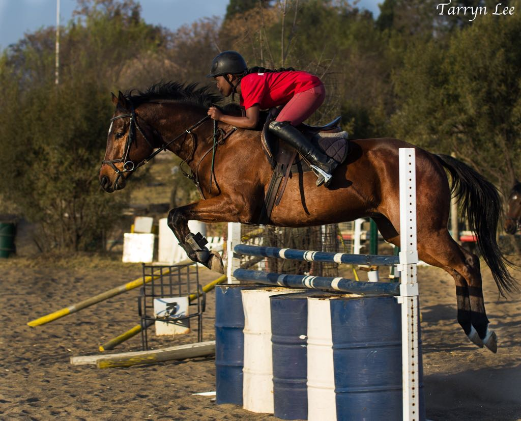 Stunning rasy to ride show jumper.