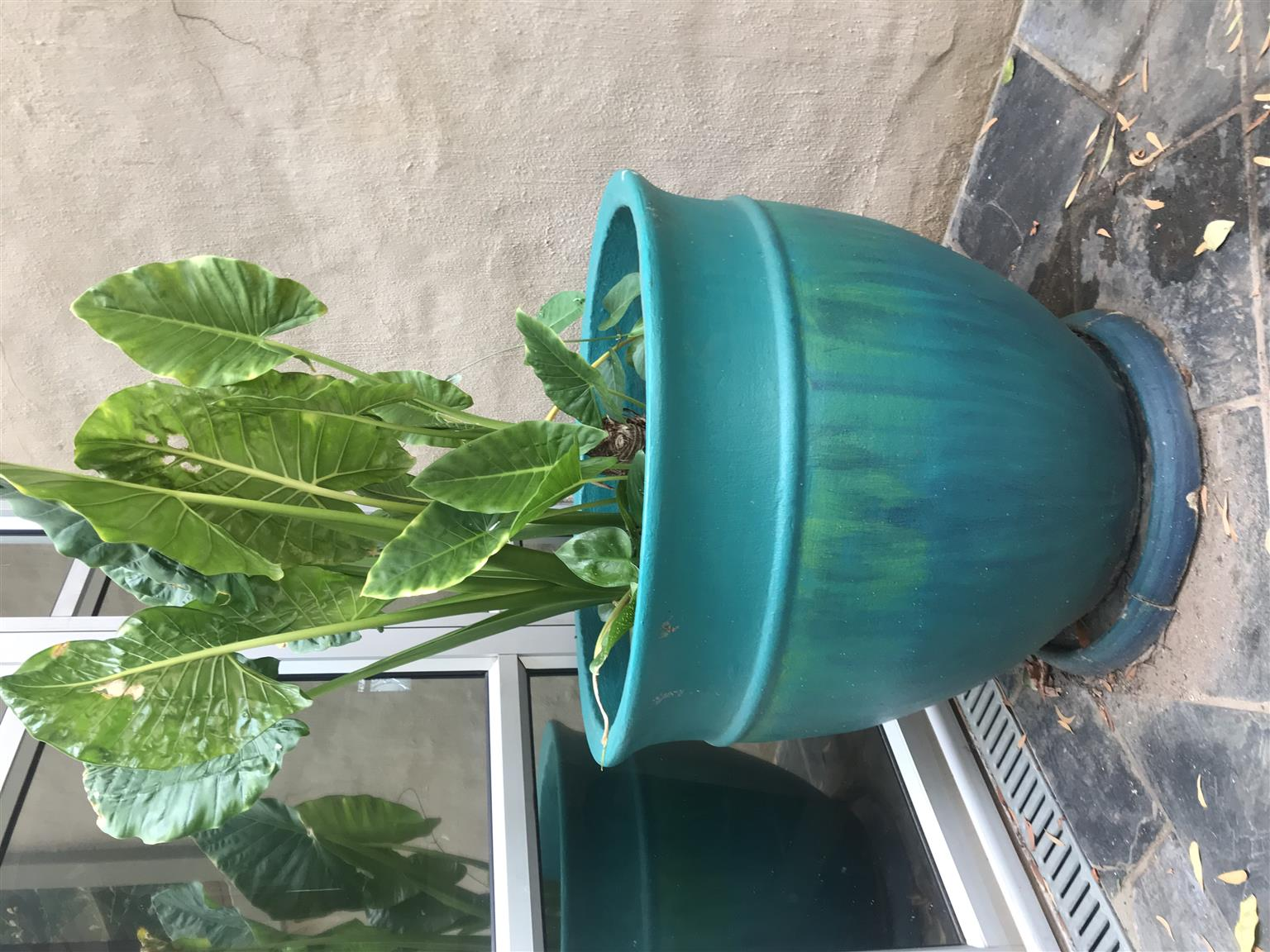 Extra large pot with plants