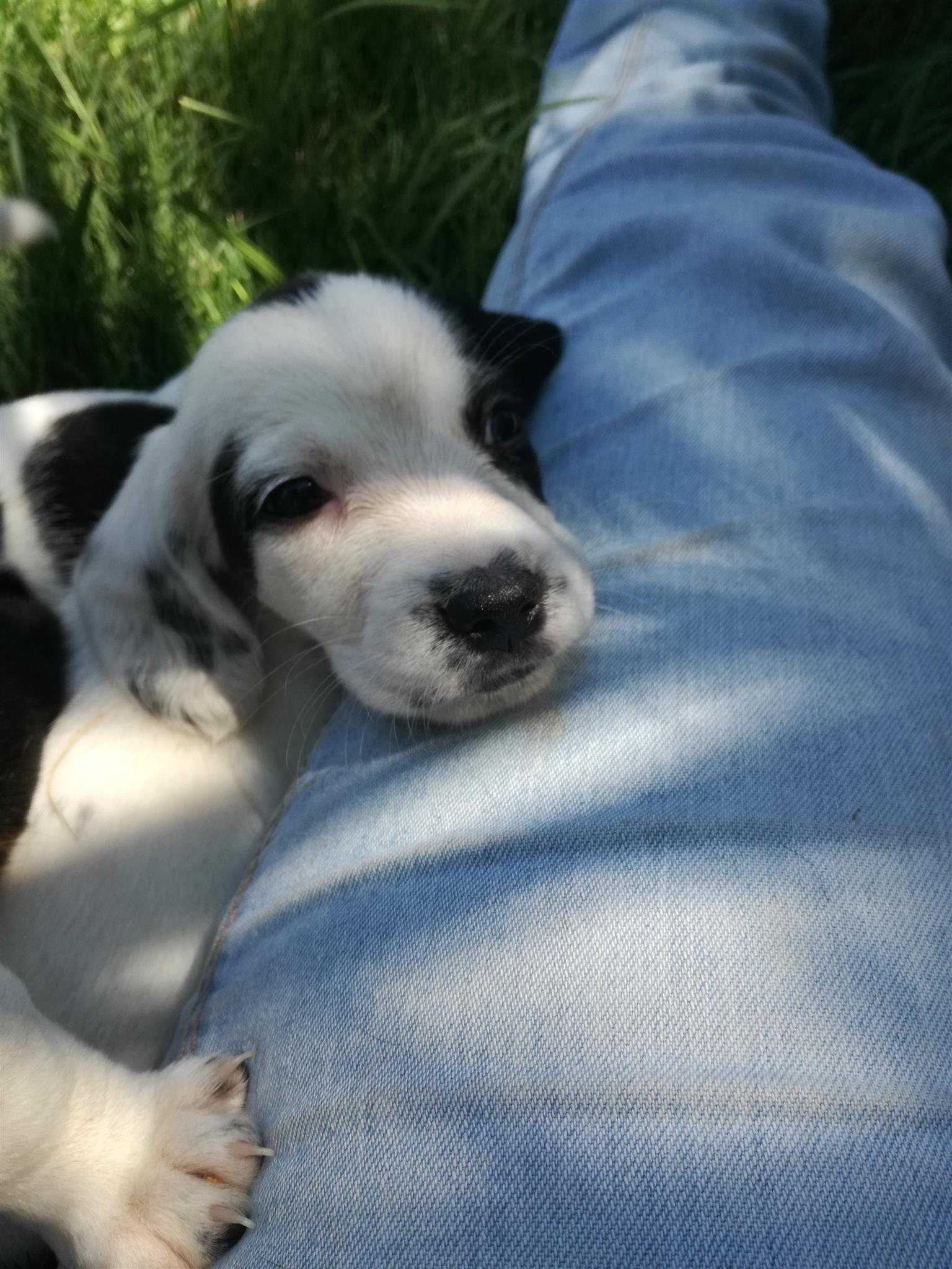 Adorable puppy for sale